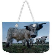 Inquisitive White High Park Cow Weekender Tote Bag
