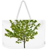 Isolated Young Maple Tree Weekender Tote Bag by Elena Elisseeva