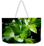 Ivy In Sunlight Weekender Tote Bag