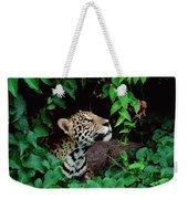 Jaguar Panthera Onca Peeking Weekender Tote Bag