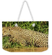 Jaguar Prowls The River's Edge Weekender Tote Bag