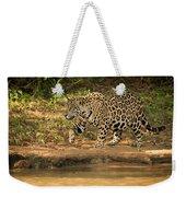 Jaguar Walking Beside River In Dappled Sunlight Weekender Tote Bag