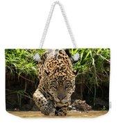 Jaguar Walking Through Muddy Shallows Towards Camera Weekender Tote Bag
