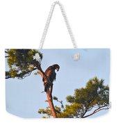 Juvenile Bald Eagle Weekender Tote Bag