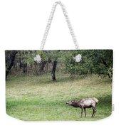 Juvenile Bull Elk Grazing 2 Weekender Tote Bag