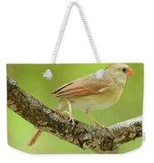 Juvenile, Female Cardinal, Animal Portrait Weekender Tote Bag
