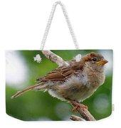 Juvenile House Sparrow Weekender Tote Bag