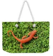 Juvenile Red-eft Green Moss North Carolina Weekender Tote Bag