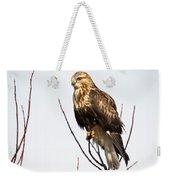 Juvenile Rough-legged Hawk  Weekender Tote Bag