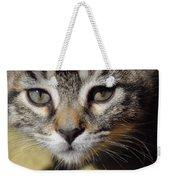 Kitten Curiosity Weekender Tote Bag