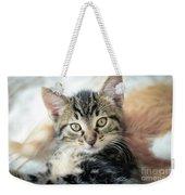 Kitten Looking Weekender Tote Bag