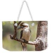 Kookaburra Sits In The Ol Gum Tree Weekender Tote Bag