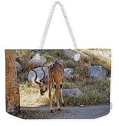 Kudu Near A Waterhole In Living Desert Zoo And Gardens In Palm Desert-california  Weekender Tote Bag