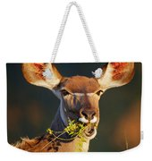 Kudu Portrait Eating Green Leaves Weekender Tote Bag