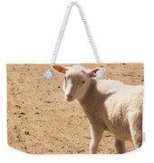 Lamb Looking Cute. Weekender Tote Bag