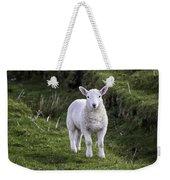 Lamb On The Isle Of Skye Weekender Tote Bag