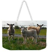 Lambs Behind The Wire Weekender Tote Bag