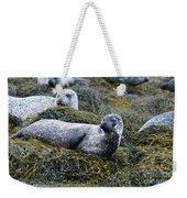 Large Harbor Seal Colony In Scotland Weekender Tote Bag