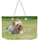 Laughing Yorkshire Terrier Weekender Tote Bag