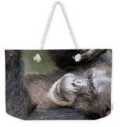 Lazy Chimp - Lowry Park Zoo Weekender Tote Bag