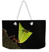 Leafcutter Ant Atta Sp Carrying Leaf Weekender Tote Bag