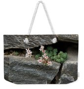 Life On Bare Rock - Pale Pink Succulents On The Wall Weekender Tote Bag