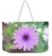 Light Purple Gazania Macro 1  Weekender Tote Bag