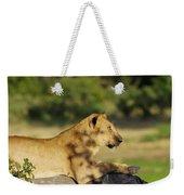 Lioness Pose Weekender Tote Bag