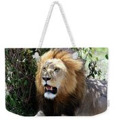 Lions Of The Masai Mara, Kenya Weekender Tote Bag