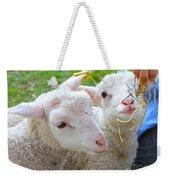 Little Lambs Eat Straw Not Ivy Weekender Tote Bag