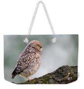 Little Owl Chick Practising Hunting Skills Weekender Tote Bag