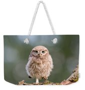 Little Owl Chick Weekender Tote Bag