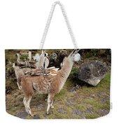 Llamas Carrying Firewood Weekender Tote Bag