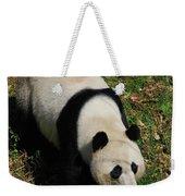 Looking Down At A Cute Giant Panda Bear Weekender Tote Bag