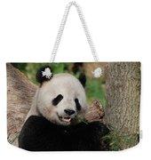 Lounging Giant Panda Bear With A Shoot Of Bamboo Weekender Tote Bag