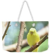 Lovable Little Budgie Parakeet Living In Nature Weekender Tote Bag