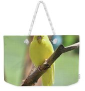 Lovable Yellow Budgie Parakeet Bird Up Close Weekender Tote Bag
