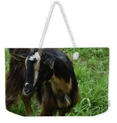 Lovely Billy Goat With Silky Black And Brown Fur Weekender Tote Bag