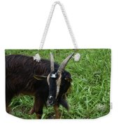 Lovely Up Close Look Into The Face Of A Pygmy Goat Weekender Tote Bag