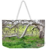 Low Branches On Sycamore Tree Weekender Tote Bag
