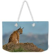 Lynx In Profile On Rock Looking Down Weekender Tote Bag