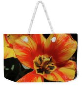 Macro Of A Blooming Striped Yellow And Red Tulip Weekender Tote Bag