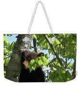 Maine Black Bear Cub In Tree Weekender Tote Bag