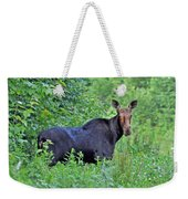 Maine Moose Weekender Tote Bag