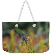 Male Cowbird Feasts On Milo In Shiloh National Military Park, Tennessee Weekender Tote Bag
