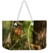 Male Finch In Red Plumage Weekender Tote Bag