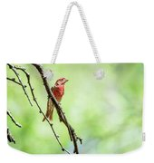 Male House Finch Out On A Limb Weekender Tote Bag