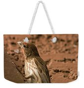 Male House Finch V10 Weekender Tote Bag