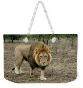 Male Lion On Alert Weekender Tote Bag