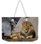 Male Lion Resting In The Warm Sunshine Weekender Tote Bag